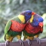 Jurong Bird Park 026
